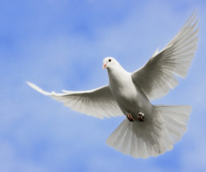 Amazing Kingdom Peace Dove